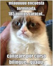 Concurso Nicequest: Gato Grumpy por Judith Cruz Fuentes